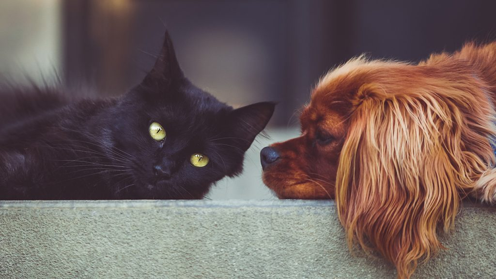 6 Tips for a Cat and Dog Friendly Home