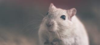 5 Ways to Keep Mice and Rats Away